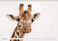 Emotionale Momente: Giraffen, die höchsten Tiere der Welt. (Wandkalender 2019 DIN A3 quer) - Produktdetailbild 12