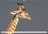 Emotionale Momente: Giraffen, die höchsten Tiere der Welt. (Wandkalender 2019 DIN A2 quer) - Produktdetailbild 1