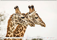 Emotionale Momente: Giraffen, die höchsten Tiere der Welt. (Wandkalender 2019 DIN A2 quer) - Produktdetailbild 5