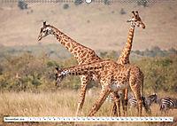 Emotionale Momente: Giraffen, die höchsten Tiere der Welt. (Wandkalender 2019 DIN A2 quer) - Produktdetailbild 11