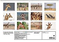 Emotionale Momente: Giraffen, die höchsten Tiere der Welt. (Wandkalender 2019 DIN A2 quer) - Produktdetailbild 13