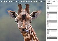 Emotionale Momente: Giraffen, die höchsten Tiere der Welt. (Tischkalender 2019 DIN A5 quer) - Produktdetailbild 6