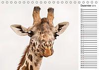 Emotionale Momente: Giraffen, die höchsten Tiere der Welt. (Tischkalender 2019 DIN A5 quer) - Produktdetailbild 12