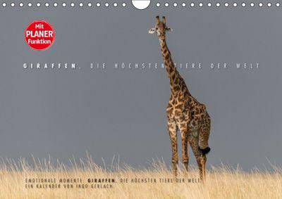 Emotionale Momente: Giraffen, die höchsten Tiere der Welt. (Wandkalender 2019 DIN A4 quer), Ingo Gerlach