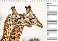 Emotionale Momente: Giraffen, die höchsten Tiere der Welt. (Wandkalender 2019 DIN A4 quer) - Produktdetailbild 5