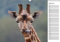 Emotionale Momente: Giraffen, die höchsten Tiere der Welt. (Wandkalender 2019 DIN A3 quer) - Produktdetailbild 6