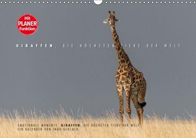 Emotionale Momente: Giraffen, die höchsten Tiere der Welt. (Wandkalender 2019 DIN A3 quer), Ingo Gerlach