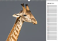 Emotionale Momente: Giraffen, die höchsten Tiere der Welt. (Wandkalender 2019 DIN A3 quer) - Produktdetailbild 1