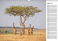 Emotionale Momente: Giraffen, die höchsten Tiere der Welt. (Wandkalender 2019 DIN A3 quer) - Produktdetailbild 4