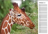 Emotionale Momente: Giraffen, die höchsten Tiere der Welt. (Wandkalender 2019 DIN A3 quer) - Produktdetailbild 10