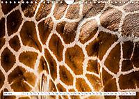 Emotionale Momente: Giraffen, die höchsten Tiere der Welt. (Wandkalender 2019 DIN A4 quer) - Produktdetailbild 7