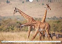 Emotionale Momente: Giraffen, die höchsten Tiere der Welt. (Wandkalender 2019 DIN A4 quer) - Produktdetailbild 11