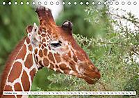 Emotionale Momente: Giraffen, die höchsten Tiere der Welt. (Tischkalender 2019 DIN A5 quer) - Produktdetailbild 10