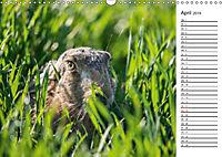 Emotionale Momente: Wild und Jagd. (Wandkalender 2019 DIN A3 quer) - Produktdetailbild 4