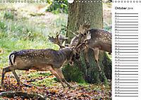 Emotionale Momente: Wild und Jagd. (Wandkalender 2019 DIN A3 quer) - Produktdetailbild 10