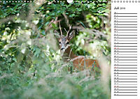 Emotionale Momente: Wild und Jagd. (Wandkalender 2019 DIN A3 quer) - Produktdetailbild 7