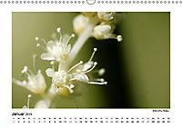 Entdeckungstour - Natur (Wandkalender 2019 DIN A3 quer) - Produktdetailbild 1