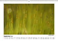 Entdeckungstour - Natur (Wandkalender 2019 DIN A3 quer) - Produktdetailbild 9