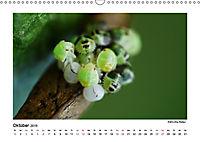 Entdeckungstour - Natur (Wandkalender 2019 DIN A3 quer) - Produktdetailbild 10