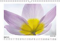 Entdeckungstour - Natur (Wandkalender 2019 DIN A4 quer) - Produktdetailbild 4