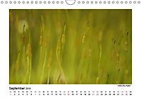 Entdeckungstour - Natur (Wandkalender 2019 DIN A4 quer) - Produktdetailbild 9