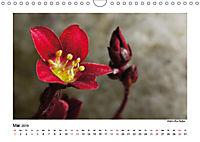 Entdeckungstour - Natur (Wandkalender 2019 DIN A4 quer) - Produktdetailbild 5