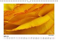 Entdeckungstour - Natur (Wandkalender 2019 DIN A4 quer) - Produktdetailbild 6