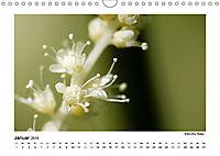 Entdeckungstour - Natur (Wandkalender 2019 DIN A4 quer) - Produktdetailbild 1