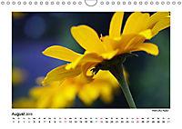 Entdeckungstour - Natur (Wandkalender 2019 DIN A4 quer) - Produktdetailbild 8
