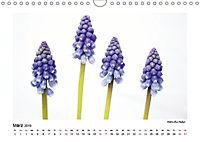 Entdeckungstour - Natur (Wandkalender 2019 DIN A4 quer) - Produktdetailbild 3