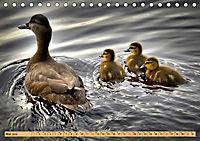 Enten. Beliebt, hübsch und imposant (Tischkalender 2019 DIN A5 quer) - Produktdetailbild 5