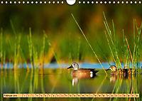 Enten. Beliebt, hübsch und imposant (Wandkalender 2019 DIN A4 quer) - Produktdetailbild 2