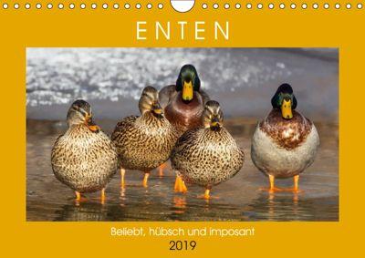 Enten. Beliebt, hübsch und imposant (Wandkalender 2019 DIN A4 quer), Rose Hurley