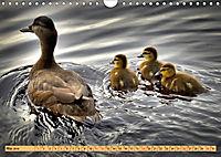 Enten. Beliebt, hübsch und imposant (Wandkalender 2019 DIN A4 quer) - Produktdetailbild 5