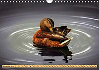 Enten. Beliebt, hübsch und imposant (Wandkalender 2019 DIN A4 quer) - Produktdetailbild 11