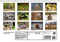 Enten. Beliebt, hübsch und imposant (Wandkalender 2019 DIN A4 quer) - Produktdetailbild 13