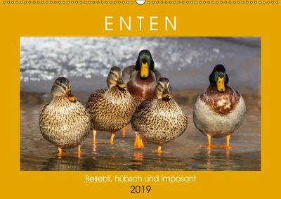 Enten. Beliebt, hübsch und imposant (Wandkalender 2019 DIN A2 quer), Rose Hurley