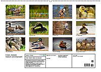Enten. Beliebt, hübsch und imposant (Wandkalender 2019 DIN A2 quer) - Produktdetailbild 13
