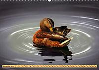 Enten. Beliebt, hübsch und imposant (Wandkalender 2019 DIN A2 quer) - Produktdetailbild 11