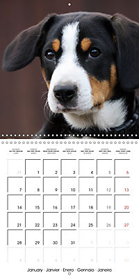 Entlebuch Mountain Dogs (Wall Calendar 2019 300 × 300 mm Square) - Produktdetailbild 1