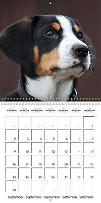 Entlebuch Mountain Dogs (Wall Calendar 2019 300 × 300 mm Square) - Produktdetailbild 9