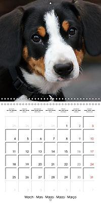 Entlebuch Mountain Dogs (Wall Calendar 2019 300 × 300 mm Square) - Produktdetailbild 3