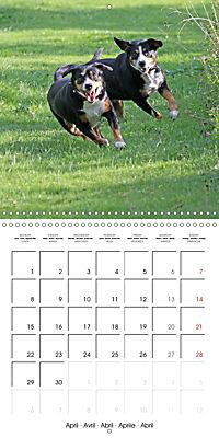 Entlebuch Mountain Dogs (Wall Calendar 2019 300 × 300 mm Square) - Produktdetailbild 4