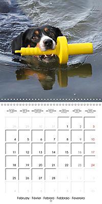 Entlebuch Mountain Dogs (Wall Calendar 2019 300 × 300 mm Square) - Produktdetailbild 2