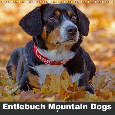 Entlebuch Mountain Dogs (Wall Calendar 2019 300 × 300 mm Square), SchnelleWelten