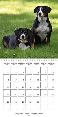 Entlebuch Mountain Dogs (Wall Calendar 2019 300 × 300 mm Square) - Produktdetailbild 5