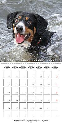 Entlebuch Mountain Dogs (Wall Calendar 2019 300 × 300 mm Square) - Produktdetailbild 8