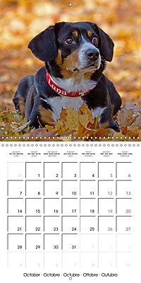 Entlebuch Mountain Dogs (Wall Calendar 2019 300 × 300 mm Square) - Produktdetailbild 10