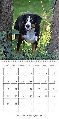 Entlebuch Mountain Dogs (Wall Calendar 2019 300 × 300 mm Square) - Produktdetailbild 7