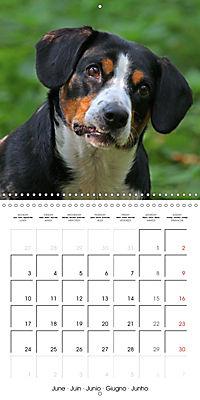 Entlebuch Mountain Dogs (Wall Calendar 2019 300 × 300 mm Square) - Produktdetailbild 6
